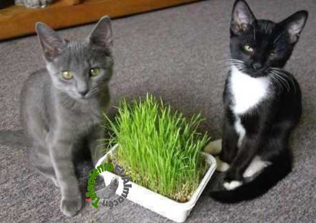 gatitos con hierba gatera