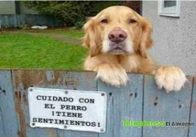 todo para ellos: los perros